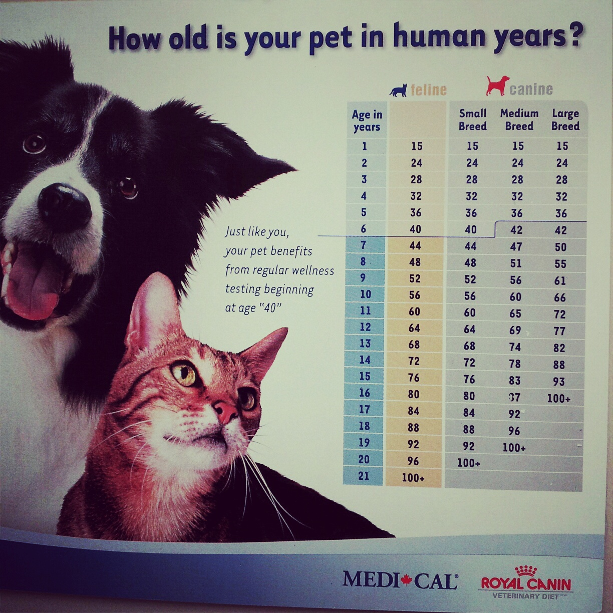 Top 28 Cat Years To Human Pin By Shawna