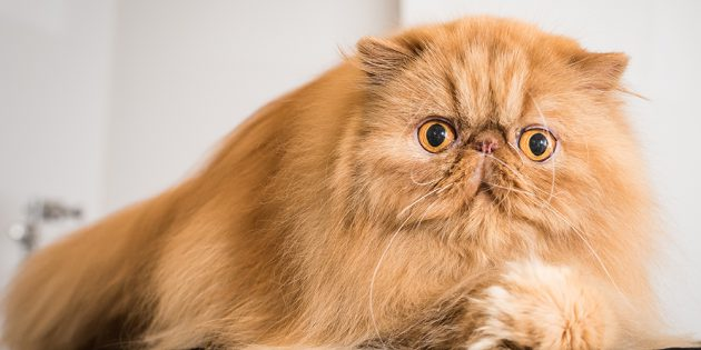 """#REVIEW: """"CATWALK: TALES FROM THE CAT SHOW CIRCUIT"""""""