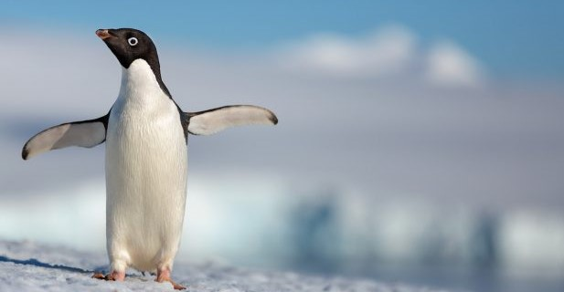 """#GIVEAWAY: ENTER FOR YOUR CHANCE TO WIN ADVANCE SCREENING PASSES TO SEE DISNEYNATURE'S """"PENGUINS"""""""