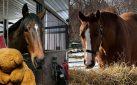 #HORSERACING: PRINCE x PRINCESS DIARIES – DECEMBER 2019