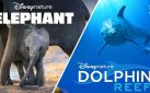 "#FIRSTLOOK: NEW TRAILERS FOR ""ELEPHANTS"" + ""DOLPHIN REEF"""