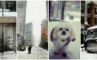 #TORONTO: SNOW DAY