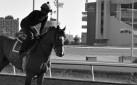#HORSERACING: LEXIE LOU SET TO MAKE 2015 COMEBACK AT WOODBINE RACETRACK